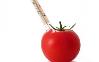 pulp tomato